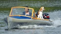 Ein Hund auf einem kleinen Motorboot
