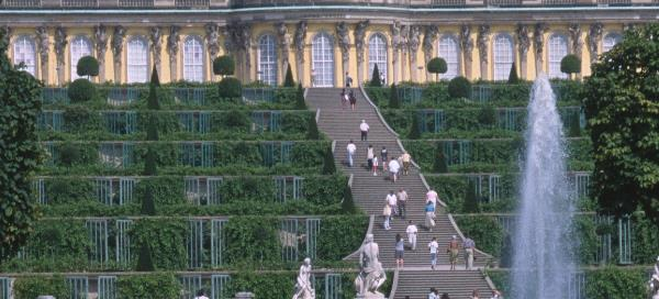 Feigen und Weinanbau vor dem Schloss Sanssoucci
