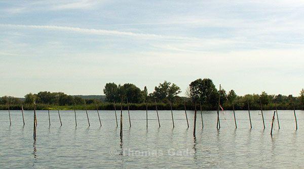In der Havel. Holzstangen für Reusen